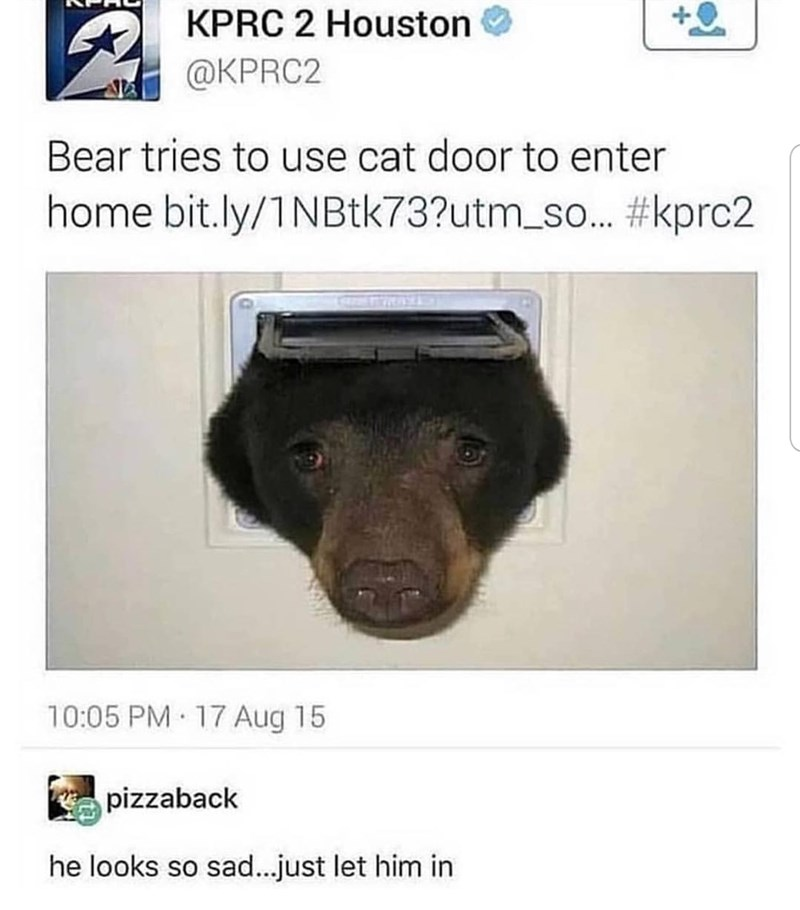 Canidae - KPRC 2 Houston @KPRC2 Bear tries to use cat door to enter home bit.ly/1NBtk73?utm_so...#kprc2 10:05 PM 17 Aug 15 pizzaback he looks so sad...just let him in