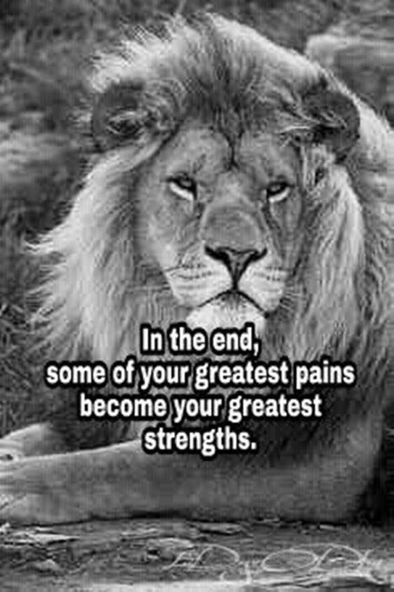 motivational lions - - Lion - In the end, some of your greatest pains become your greatest strengths.