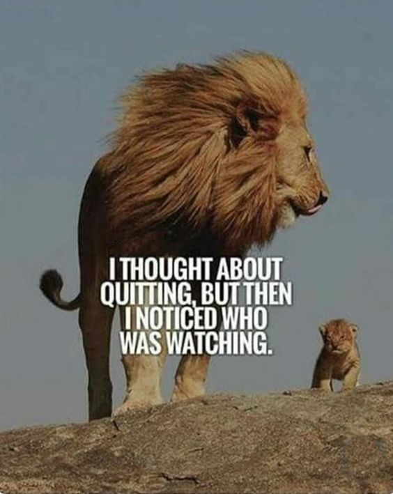 motivational lions - - Vertebrate - ITHOUGHT ABOUT QUITTING BUTTHEN INOTICED WHO WAS WATCHING