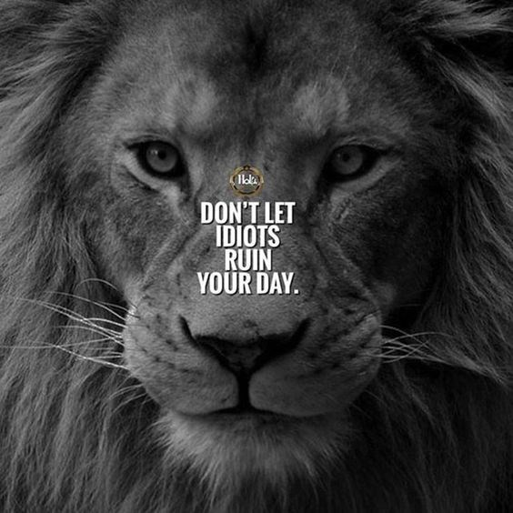 motivational lions - - Vertebrate - DON'T LET IDIOTS RUIN YOUR DAY