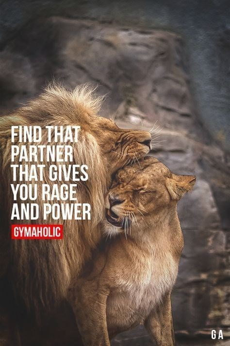 motivational lions - - Wildlife - FIND THAT PARTNER THAT GIVES YOU RAGE AND POWER GYMAHOLIC GA