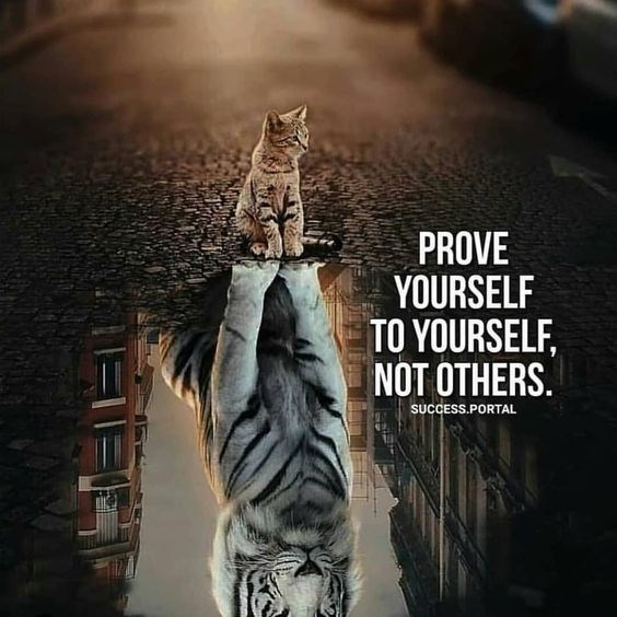 motivational lions - - Felidae - PROVE YOURSELF TO YOURSELF NOT OTHERS SUCCESS.PORTAL
