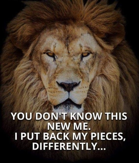 motivational lions - - Lion - YOU DON'T KNOW THIS NEW ME. I PUT BACK MY PIECES, DIFFERENTLY...