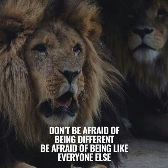 motivational lions - - Lion - DONT BE AFRAID OF BEING DIFFERENT BE AFRAID OF BEING LIKE EVERYONE ELSE