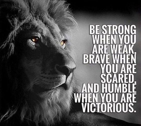 motivational lions - - Lion - BE STRONG WHEN YOU ARE WEAK, BRAVE WHEN YOU ARE SCARED AND HUMBLE WHEN YOU ARE VICTORIOUS.