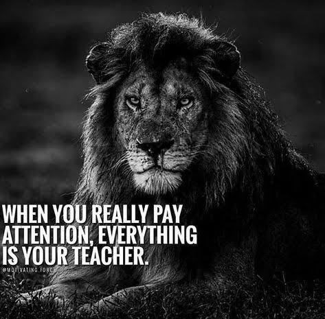motivational lions - - Wildlife - WHEN YOU REALLY PAY ATTENTION, EVERYTHING IS YOUR TEACHER euriVATING FOR