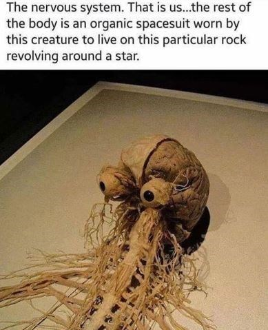 """Caption that reads, """"The nervous system. This is us...the rest of the body is an organic spacesuit worn by this creature to live on this particular rock revolving around a star"""" above a pic of a creepy-looking brain with nerves protruding out of it"""