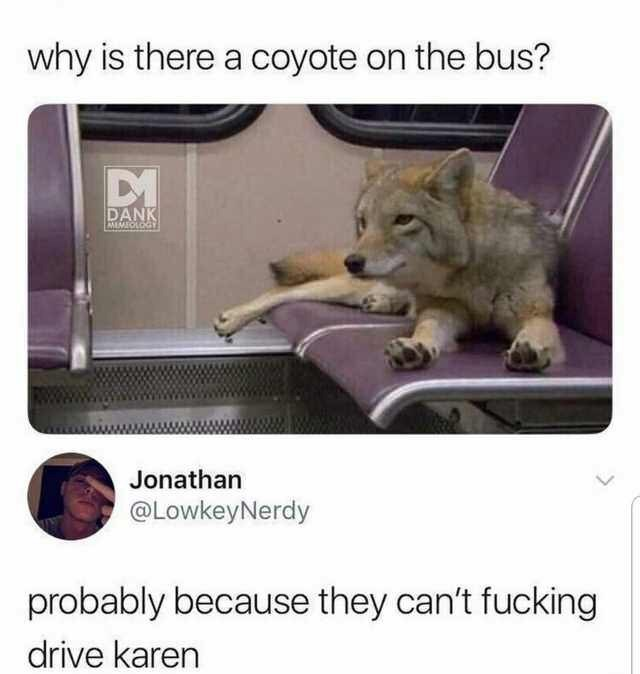meme - Photo caption - why is there a coyote on the bus? DANK MEMEOLOGY Jonathan @LowkeyNerdy probably because they can't fucking drive karen