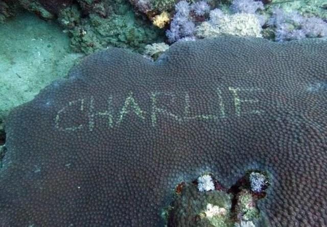 Reef - CHARLIE