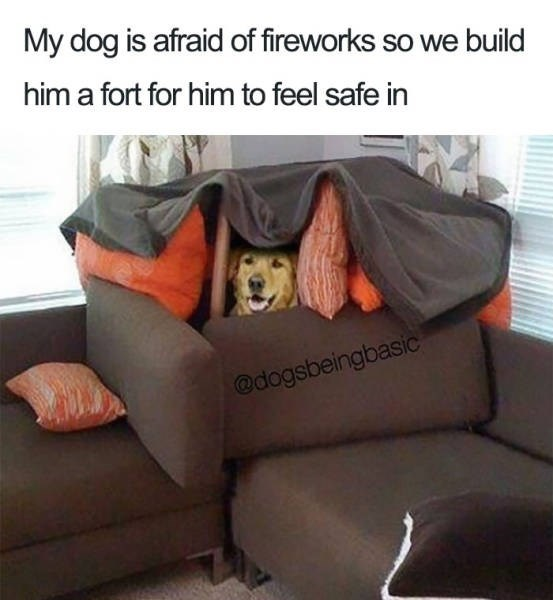 Couch - My dog is afraid of fireworks so we build him a fort for him to feel safe in @dogsbeingbasic