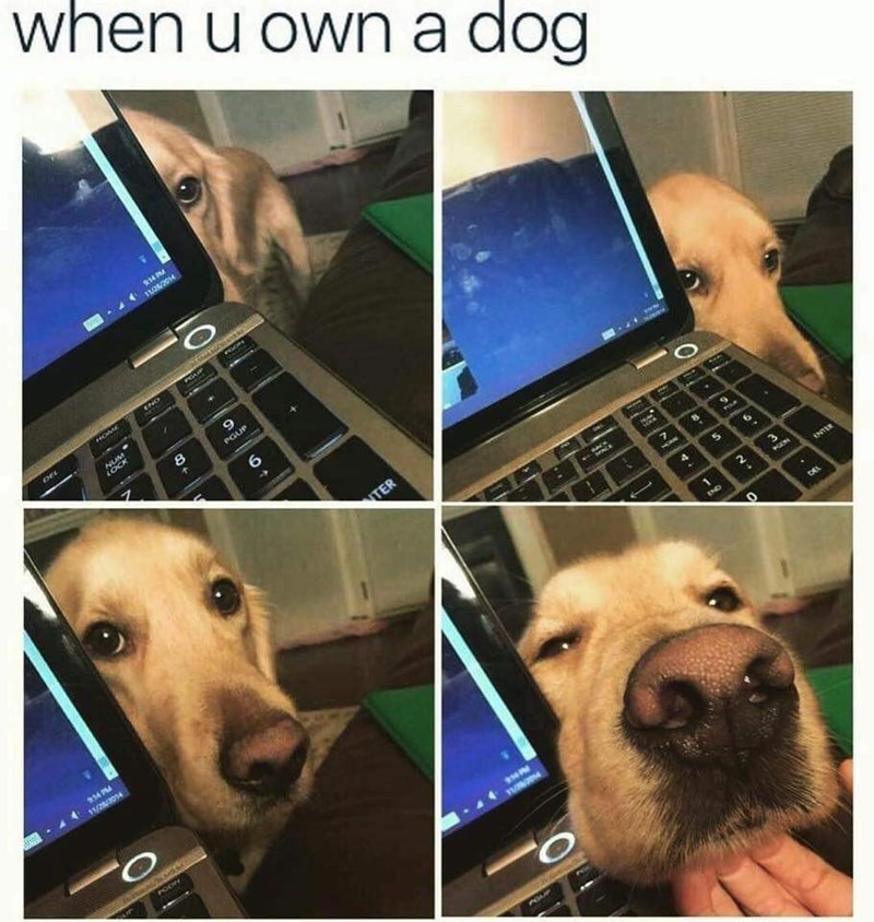 """Caption that reads, """"When you own a dog"""" above pics of a cute dog trying to distract his human from working on their computer"""