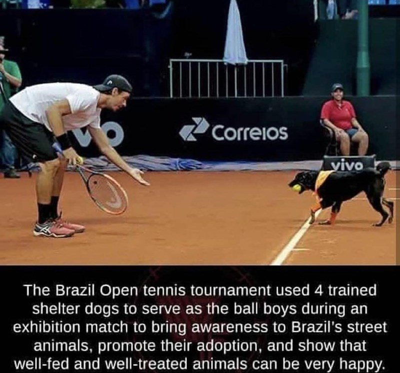 Sports - Correios vivo The Brazil Open tennis tournament used 4 trained shelter dogs to serve as the ball boys during an exhibition match to bring awareness to Brazil's street animals, promote their adoption, and show that well-fed and well-treated animals can be very happy.
