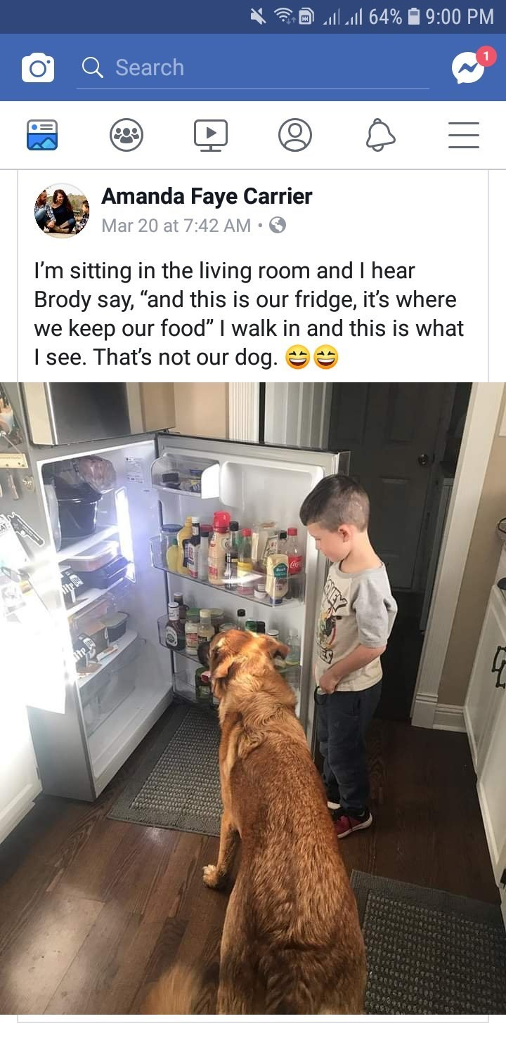 "Dog - al 64% 9:00 PM Search CO Amanda Faye Carrier Mar 20 at 7:42 AM I'm sitting in the living room and I hear Brody say, ""and this is our fridge, it's where we keep our food"" I walk in and this is what I see. That's not our dog. e lite"