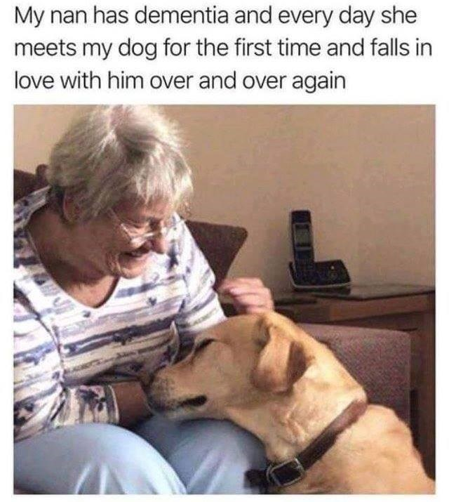 Canidae - My nan has dementia and every day she meets my dog for the first time and falls in love with him over and over again