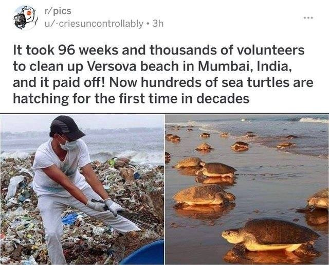 Adaptation - r/pics u/-criesuncontrollably 3h It took 96 weeks and thousands of volunteers to clean up Versova beach in Mumbai, India, and it paid off! Now hundreds of sea turtles are hatching for the first time in decades