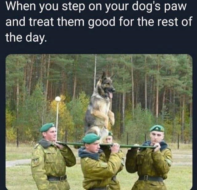 Photo caption - When you step on your dog's paw and treat them good for the rest of the day.