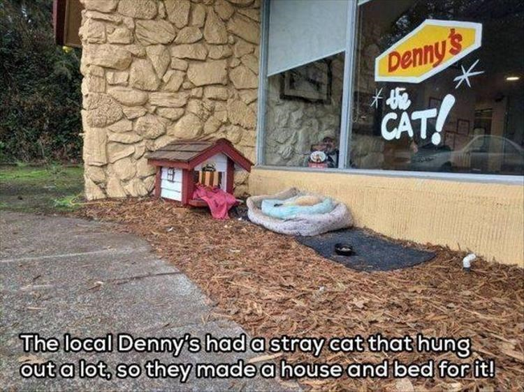 Wall - Denny's CAT! The local Denny's had a stray cat that hung out a lot, so they made a house and bed forit!