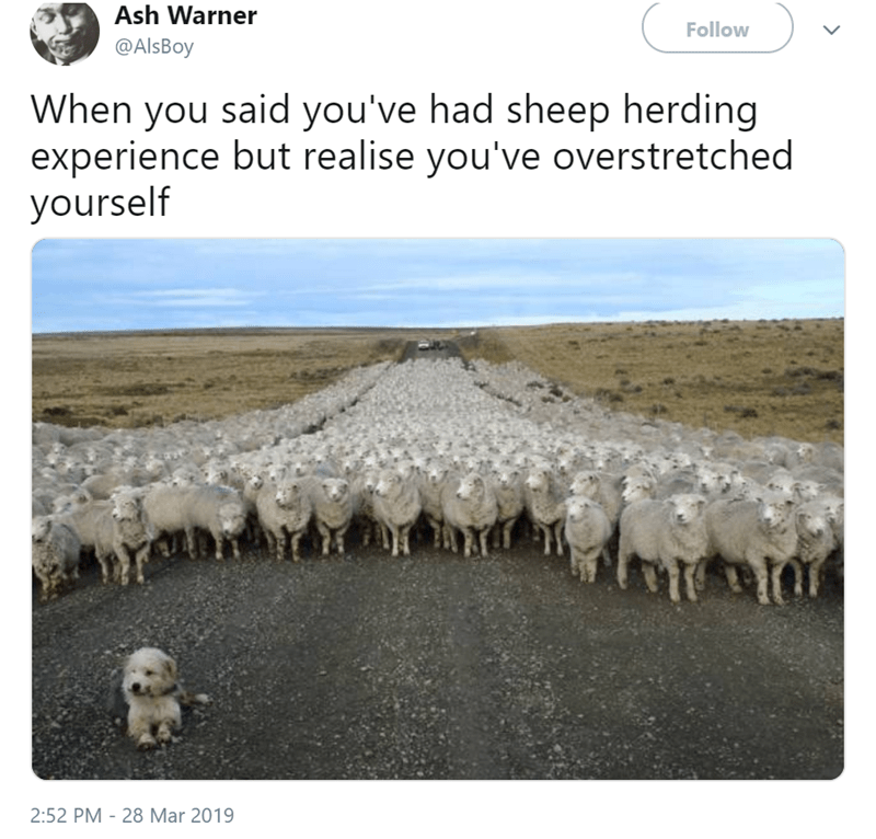 Herd - Ash Warner Follow @AlsBoy When you said you've had sheep herding experience but realise you've overstretched yourself 2:52 PM - 28 Mar 2019