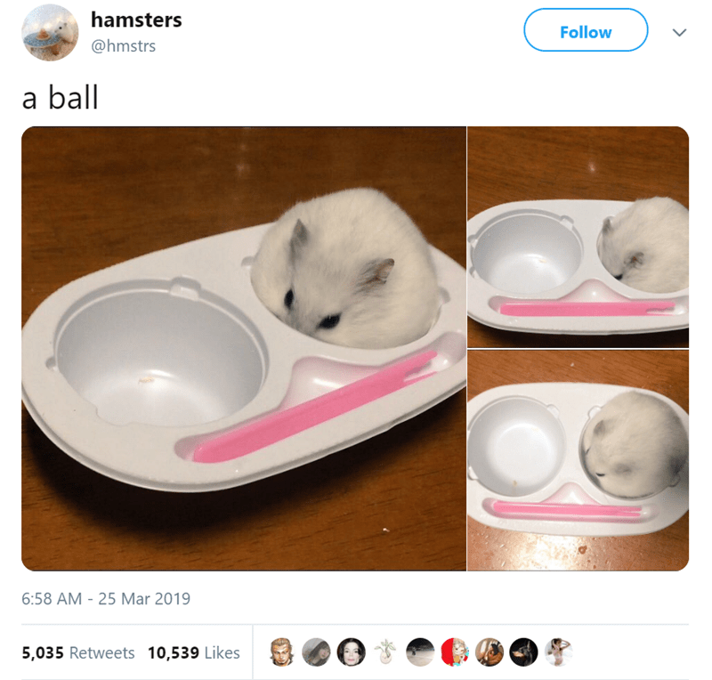 Product - hamsters Follow @hmstrs a ball 6:58 AM -25 Mar 2019 5,035 Retweets 10,539 Likes