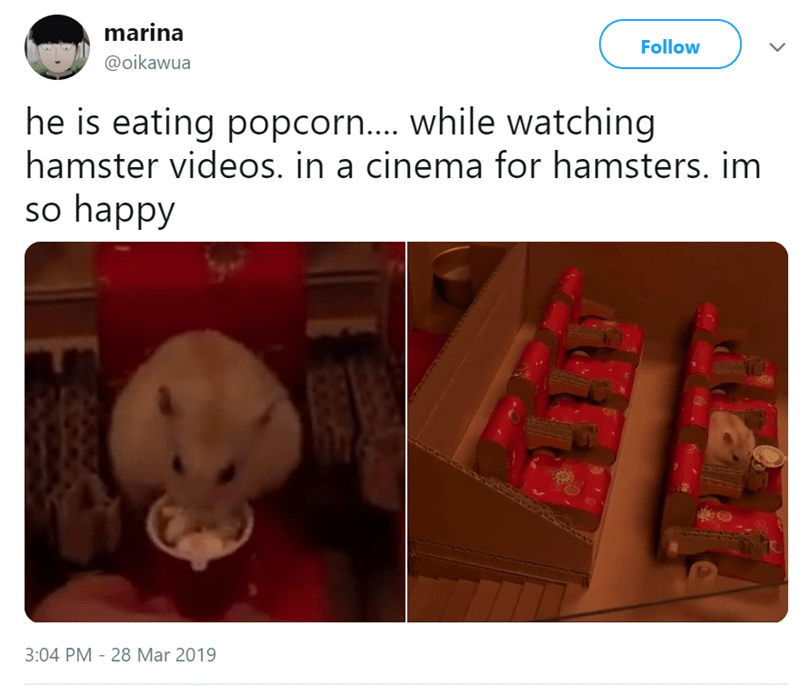 Teddy bear - marina Follow @oikawua he is eating popcorn.... while watching hamster videos. in a cinema for hamsters. im so happy 3:04 PM 28 Mar 2019