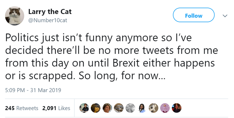 Text - Larry the Cat Follow @Number10cat Politics just isn't funny anymore so I've decided there'll be no more tweets from me from this day on until Brexit either happens or is scrapped. So long, for now... 5:09 PM - 31 Mar 2019 245 Retweets 2,091 Likes
