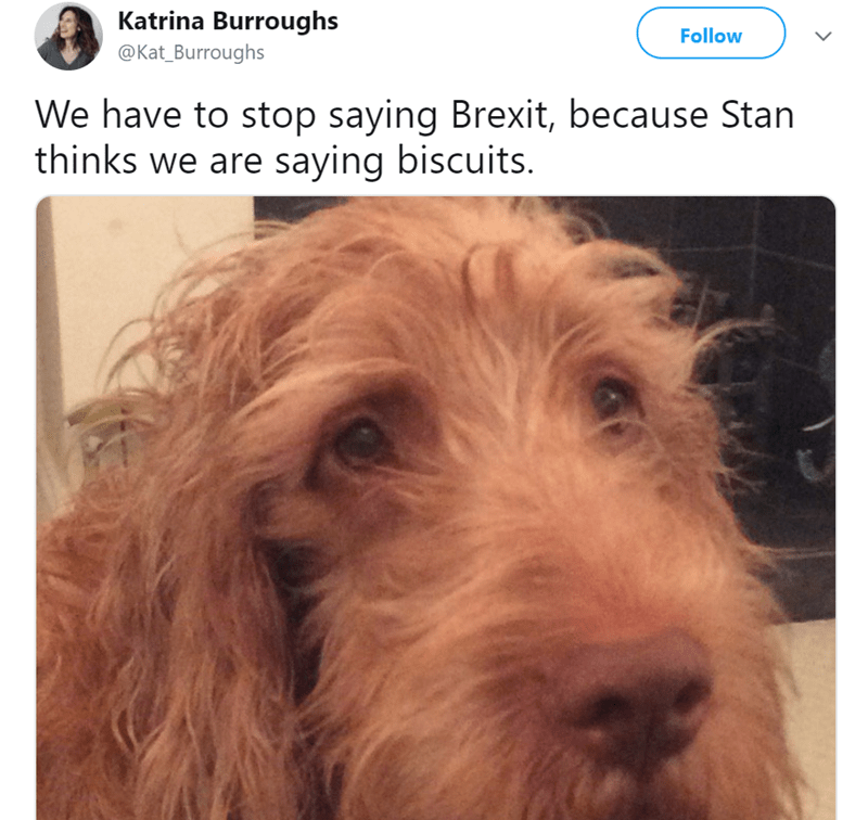 Dog - Katrina Burroughs Follow @Kat_Burroughs We have to stop saying Brexit, because Stan thinks we are saying biscuits.
