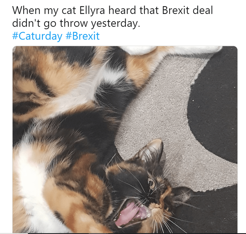 Cat - When my cat Ellyra heard that Brexit deal didn't go throw yesterday. #Caturday #Brexit