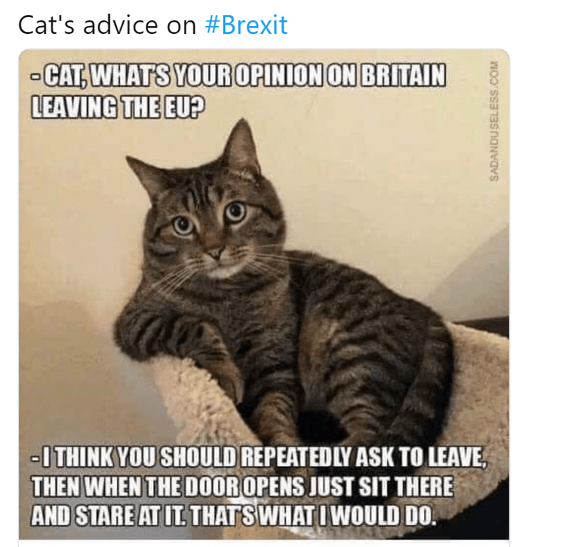 Cat - Cat's advice on #Brexit CAT, WHATS YOUROPINION ON BRITAIN LEAVING THE EU? -ITHINK YOU SHOULD REPEATEDLY ASK TO LEAVE THEN WHEN THE DOOROPENS JUST SIT THERE AND STARE AT IT. THATS WHATI WOULD DO. SADANDUSELESS.COM