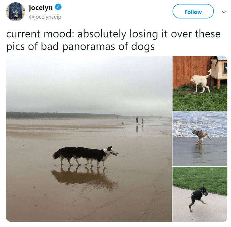 Text - jocelyn Follow @jocelynseip current mood: absolutely losing it over these pics of bad panoramas of dogs