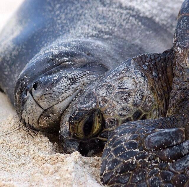 cute animals - Turtle