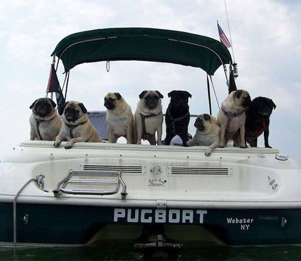 puns - Dog - PUCBOAT Webster NY