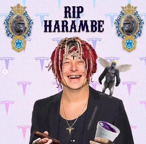 Cool - RIP HARAMBE TA eSPETTACOMEDY