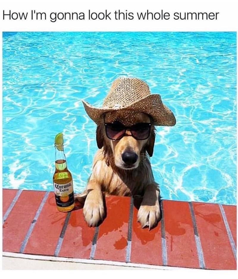 meme - Dog - How I'm gonna look this whole summer CForona Extra