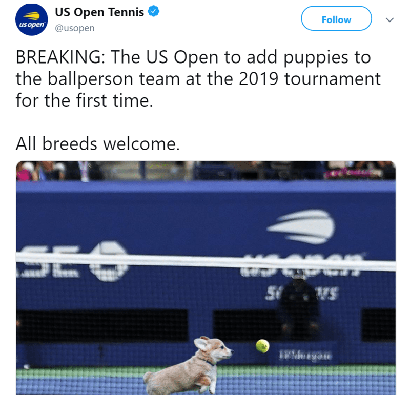 Line - US Open Tennis Follow us open@usopen BREAKING: The US Open to add puppies to the ballperson team at the 2019 tournament for the first time. All breeds welcome. SEO VS