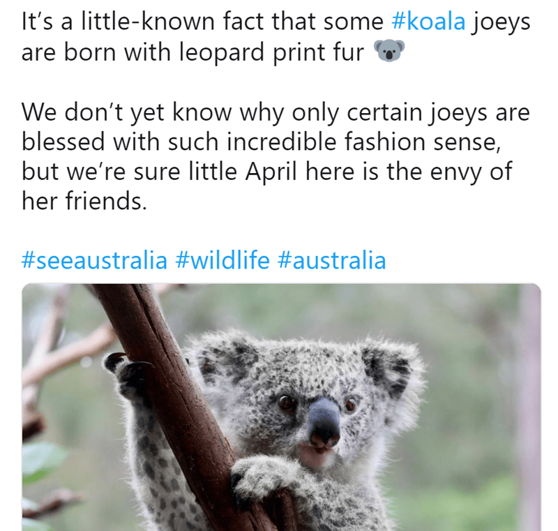 Koala - It's a little-known fact that some #koala joeys are born with leopard print fur We don't yet know why only certain joeys are blessed with such incredible fashion sense, but we're sure little April here is the envy of her friends. #seeaustralia #wildlife #australia