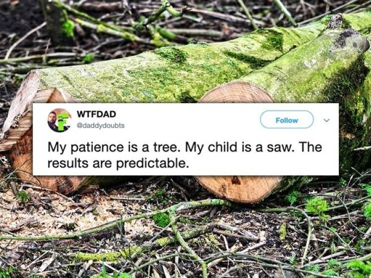 twitter post My patience is a tree. My child is a saw. The results are predictable