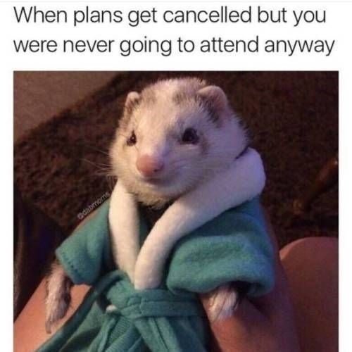 Photo caption - When plans get cancelled but you were never going to attend anyway edabmoms