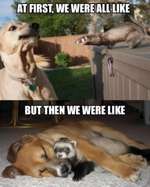 Dog - AT FIRST, WE WEREALL LIKE BUT THEN WE WERE LIKE