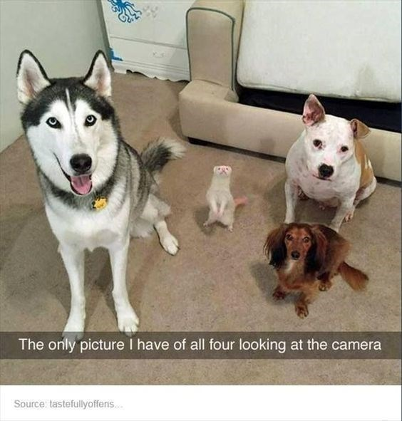 Dog - The only picture I have of all four looking at the camera Source: tastefullyoffens...
