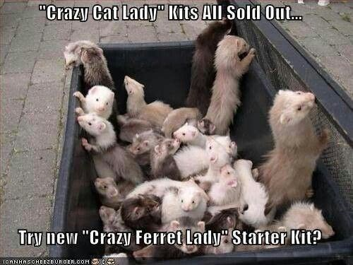 """Photo caption - """"Crazy Cat Lady"""" Kits All Sold Out... Try new """"Crazy Ferret Lady Starter Kit? TCANHASCHEE2E URGER COMS"""