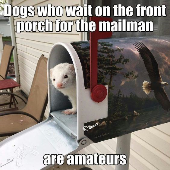 Photo caption - Dogs who wait on the front porch for the mailman are amateurs