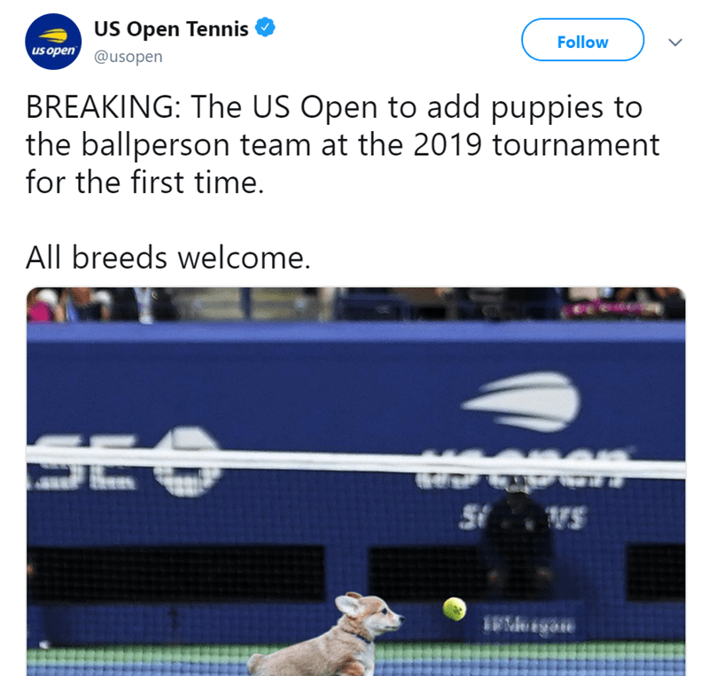 Text - US Open Tennis Follow us open @usopen BREAKING: The US Open to add puppies to the ballperson team at the 2019 tournament for the first time. All breeds welcome. SEO VS