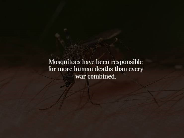 Black - Mosquitoes have been responsible for more human deaths than every war combined.