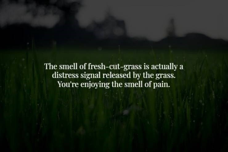 Green - The smell of fresh-cut-grass is actually a distress signal released by the grass. You're enjoying the smell of pain.