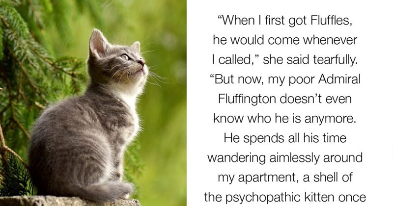 """Cat - """"When I first got Fluffles, he would come whenever I called,"""" she said tearfully. """"But now, my poor Admiral Fluffington doesn't even know who he is anymore. He spends all his time wandering aimlessly around my apartment, a shell of the psychopathic kitten once"""