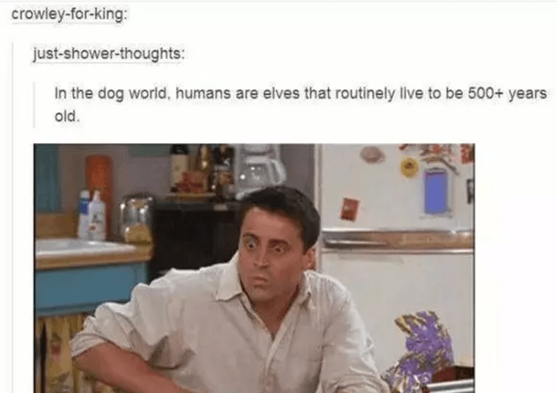 funny tumblr post animals picture joey from friends looking caught in the act In the dog world, humans are elves that routinely live to be 500+ years old.