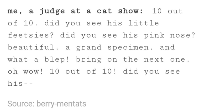 funny tumblr post animals judge at 10 out a cat show: me, а of 10. did you see his little feetsies? did you see his pink nose? beautifui. grand specimen. and а what a blep! bring on the next one. oh wow! 10 out of 10! did you se е his- - Source: berry-mentats