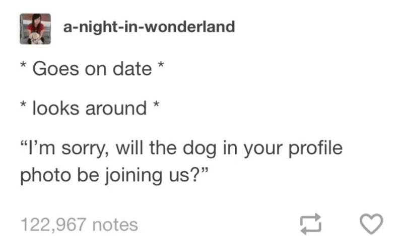 """funny tumblr post animals Goes on date looks around """"I'm sorry, will the dog in your profile photo be joining us?"""" 122,967 notes"""