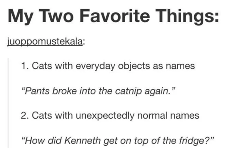 "funny tumblr post animals My Two Favorite Things: juoppomustekala: 1. Cats with everyday objects as names ""Pants broke into the catnip again."" 2. Cats with unexpectedly normal names ""How did Kenneth get on top of the fridge?"""