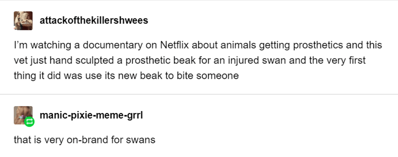 funny tumblr post animals I'm watching a documentary on Netflix about animals getting prosthetics and this vet just hand sculpted a prosthetic beak for an injured swan and the very first thing it did was use its new beak to bite someone manic-pixie-meme-grrl that is very on-brand for swans